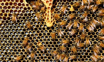 This year honey production in some Bulgarian areas will be about 50% less than last year